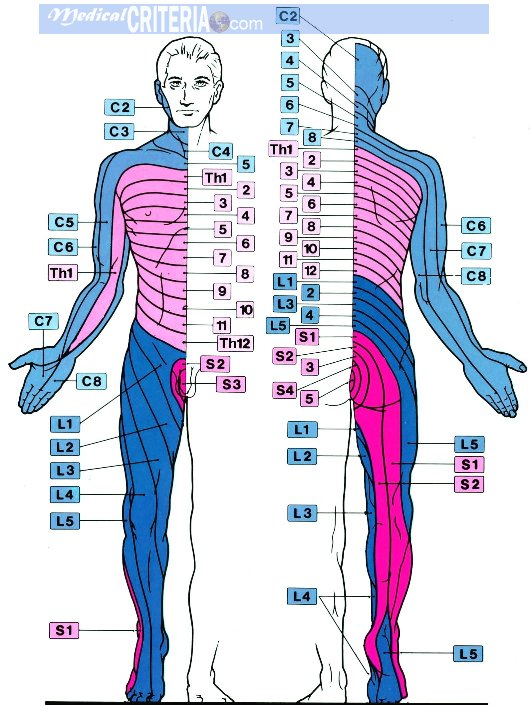 Dermatome Map http://www.medicalcriteria.com/site/index.php?option=com_content&view=article&id=96%3Aneurodermatome&catid=64%3Aneurology&Itemid=80&lang=en
